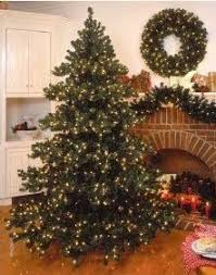 Which Christmas Tree Smells The Best Uk by When To Put Up The Christmas Tree