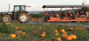 Puyallup Pumpkin Patch by Best Pumpkin Patches And Corn Mazes Near Tacoma Puyallup Auburn