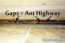 Condo Blues How to Rid of Ants in a Pet and Kid Safe Natural Way