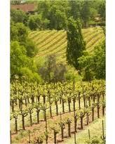 Hills And Vineyard In California Wallpaper Wall Mural Self Adhesive