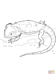 Click The Bearded Dragon Coloring