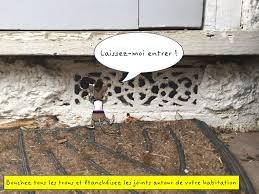 souris dans la maison stopnuisibles