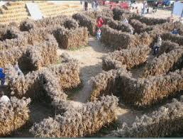 Pumpkin Farms In Belleville Illinois by Pumpkin Patches And October Festivals