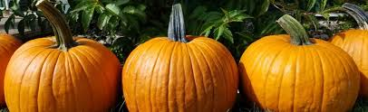 Central Wisconsin Pumpkin Patches by Country Bumpkin Farm Market Country Bumpkin Farm Market