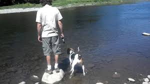 Do Treeing Walker Coonhounds Shed by Treeing Walker Coonhound Maci Takes Her 1st Swim Youtube