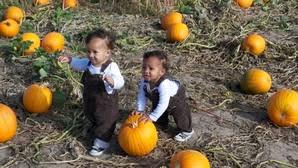 Pumpkin Patch Daycare Kearney by What To Do In Nebraska Now That It U0027s Officially Fall