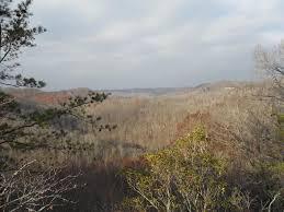 100 Wildcat Ridge 1 Frenchburg KY 40322