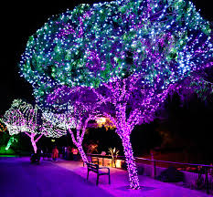 ZooLights 2018 Phoenix Zoo Will Have Reindeer