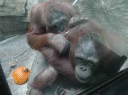 Toledo Zoo Halloween Events 2017 by Tr Cedar Point Closing Weekend U0026 Toledo Zoo Stop 11 1 11 2 2014