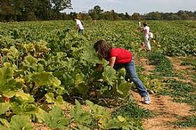 Pumpkin Patch Chesapeake Va by Corn Mazes And Pumpkin Patches Virginia Is For Lovers