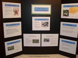 Science Fair Display Skunks