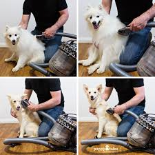 Excessive Hair Shedding In Dogs by Dog Shedding Essentials For A Tidy Home U0026 Dog