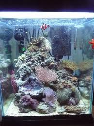 aquarium nano eau de mer nanocube 85l récifal forum maintenance spécifique des picos