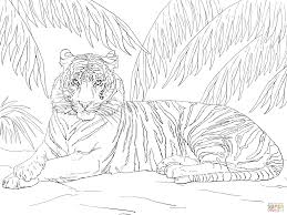 Fancy Tiger Coloring Pages Click The Sumatran Laying Down
