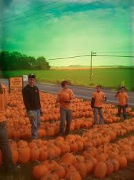 Apple Pumpkin Picking Syracuse Ny by Tim U0027s Pumpkin Patch Pumpkin Picking And Pricing