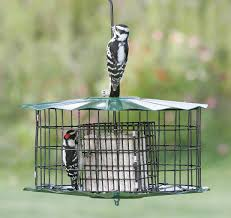 Squirrel Proof Bird Feeders Wild Bird Feeder