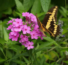 Attracting Insects To Your Garden by Attracting Butterflies To Your Garden East Texas Gardening