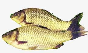 Tilapia 2 Element Two Fish PNG Image And Clipart
