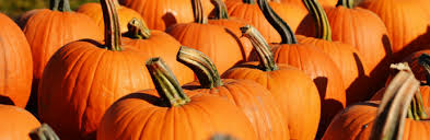 North Lawrence Pumpkin Patch by Pumpkin Patches In And Around Westchester County Kids Out And