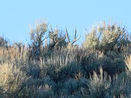 southern utah hunt and fish feb 3 2012