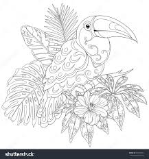 Toucan Adult Coloring Page Stock Photos Images Pictures 15