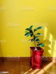 die sonne scheint im wohnzimmer stockfoto und mehr bilder