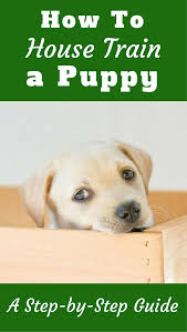 How To House Train A Puppy - Follow These Steps Amazoncom High Tech Pet Humane Contain X10 Rechargeable Multi Dog Gone Problems How To Keep Your Dog Safe Around Weed Killer Canine Hoarders Why Do Dogs Bury Food Petful What Should I If My Dies At Home The 25 Best Proof Fence Ideas On Pinterest Digging Dogs Blog Ruff Life Outfitters Animal Tips Archives Tupelolee Society Wireless Fence 2017 Top Consumer Picks Expert Unbiased Reviews Logic Lol You Stop Feeding Your Commercial 26 Quick Simple Ways To Relieve Boredom Puppy Leaks Is It Legal A In Yard Willamette Week