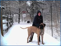 Large Dog Breeds That Dont Shed by Extra Large Dog Breeds That Don T Drool Breed Dogs Picture
