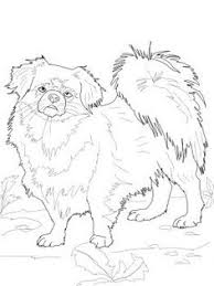 Tibetan Spaniel Coloring Page From Dogs Category Select 27278 Printable Crafts Of Cartoons Nature Animals Bible And Many More