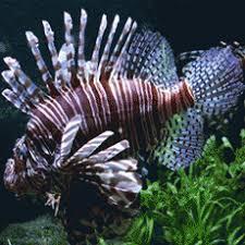 aquarium tropical de la porte dorée parcs de loisirs ile de