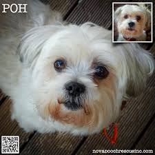 Low Shedding Small Dogs by Pho Nova Pooch Rescue Inc