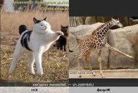 warrior cat names warrior cat names