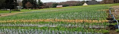 bj garlic slider 4c bj gourmet garlic farm