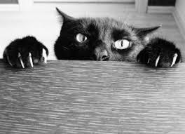comment eviter les griffes de sur canape comment arrêter un de griffer mordre et monter sur la table
