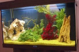 plante artificielle pour aquarium décorations fait maison pour aquarium