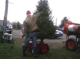 Making Christmas Tree Preservative by About Us Pictures And Information