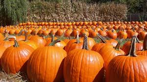 Columbus Ohio Pumpkin Patches by 11 Local Pumpkin Patches Worth A Visit This Fall