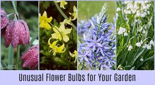 flower bulbs for your garden and how to plant them
