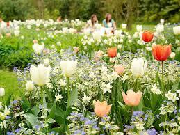 5 daffodil planting tips