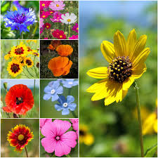 All Annual Wildflower Mixture Pob Spring Cleaning Sale 20 Off All Catalog Items Through March 27 California Found February 2018 Subscription Box Review Coupon Eden Brothers Seed Company 15 Color Based Mixes Milled Wildflower Apparel And Co Coupons Promo Discount Codes Serenbe Playhouse The Meadow Tickets Coupons 3 For 2 Wedding Clipart Marriage Words Clip Art Save The Date I Love You Mr Mrs Thank Handdrawn Digital Seafoam Flower Pink Shabby Chic Digitally Hand Drawn For Invitations Valentines Day Vtagepink Purchase David Tutera Personalized Foil Clear Case Cover Milkyway Nature Hills Coupon Code Wdst Restaurant Deals For Pandora Wildflower Murano Charm Af682 30642 Cbd And Thc Soap Vaporizers Capsules
