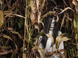 Sauvies Island Pumpkin Patch Corn Maze by The 25 Best Haunted Corn Maze Ideas On Pinterest Autumn Bucket
