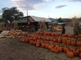 Pumpkin Patch Bakersfield by Munson Farms