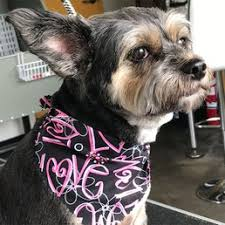 Hollycrest Bed And Biscuit by Peyton U0027s Place Dog Grooming Pet Groomers 1300 E Main St
