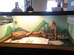 my bearded yoshi and his custom cage background gaming