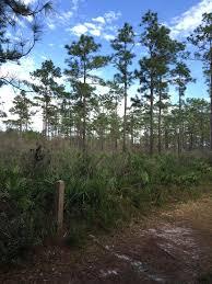 Best Trails near Oviedo Florida