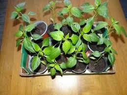 pflanzen garten möbel gebraucht kaufen in bad aibling
