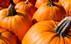 Best Pumpkin Apple Picking Long Island Ny by Pick Your Own Fruit Pick Your Own Peaches Long Island New York