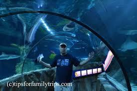 what to expect at the sea aquarium at legoland