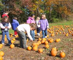 Seattle Pumpkin Patch For Adults by 6 Pumpkin Patches Near Nyc You Can Reach By Public Transit Curbed Ny