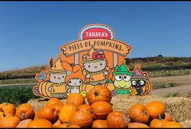 Pumpkin Patch Irvine University by The Tanaka Farms Pumpkin Patch California U0027s Hello Kitty Pumpkin
